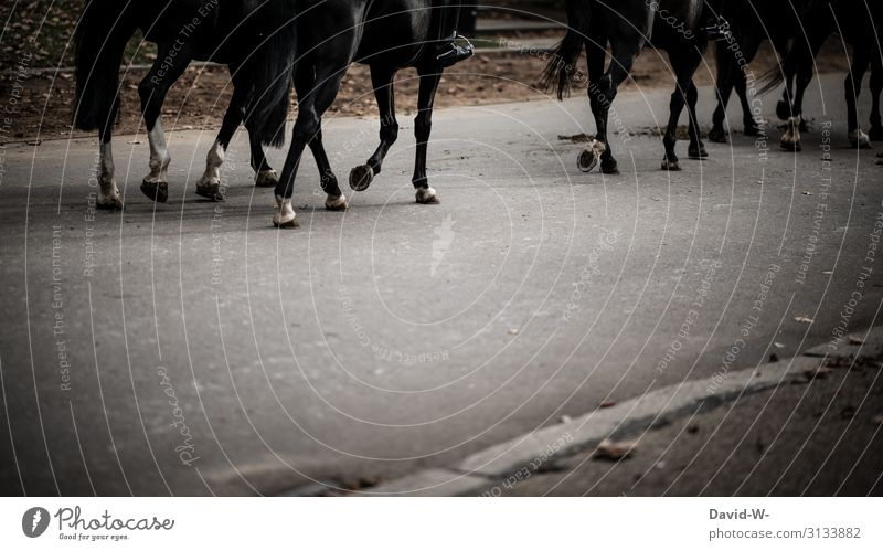 on the way with the horse through the city horses Horse Rider Town Concrete dimmest Unhealthy Horseshoe Misted up Gray Animal Exterior shot Human being
