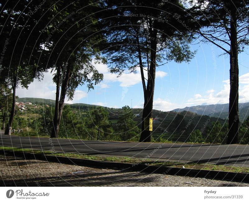 Tree Europe Break Vantage point Parking lot Portugal