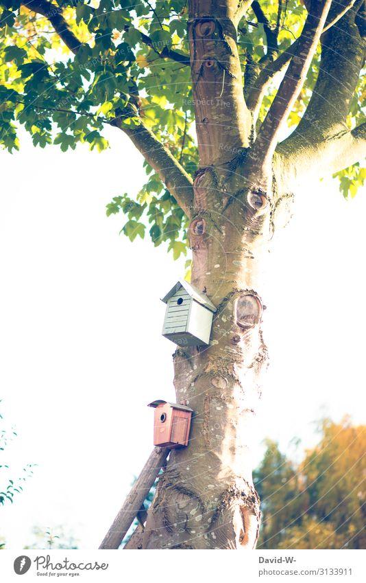 Nature Summer Landscape Tree Animal Winter Lifestyle Autumn Environment Art Garden Bird Flying Living or residing Park Beautiful weather