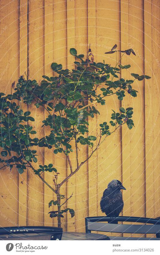 TT | Firlefanz on the wall Chair Plant Animal Tree Bushes Wild animal Bird 1 Sit Wait Gloomy Yellow Green Black Boredom Sadness Appetite Loneliness