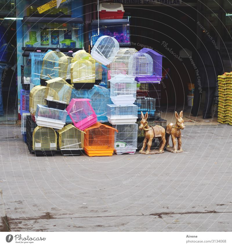 vacancy Shopping Pet shop Bazaar Markets Store premises Toys Cage Bird's cage Cuddly toy Plastic Happiness Bright Kitsch Funny Cute Many Multicoloured