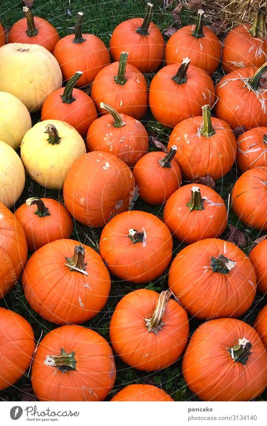 biological | dynamic pumpkins Orange Yellow Many fruit biologically dynamic organic biodynamic salubriously Nutrition Food Organic produce Vegetarian diet Fresh