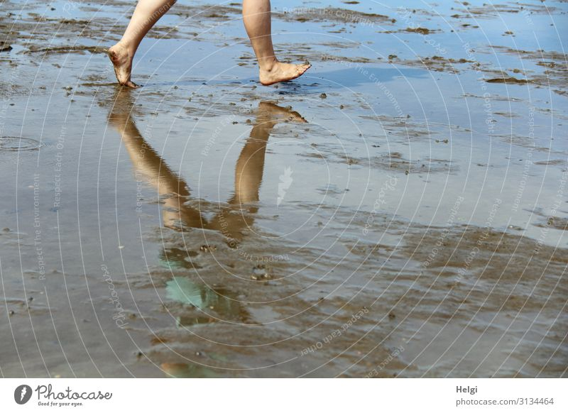 Detail view legs in the Wadden Sea with reflection in the water Human being Feminine Legs Feet 1 30 - 45 years Adults Environment Nature Landscape Earth Water