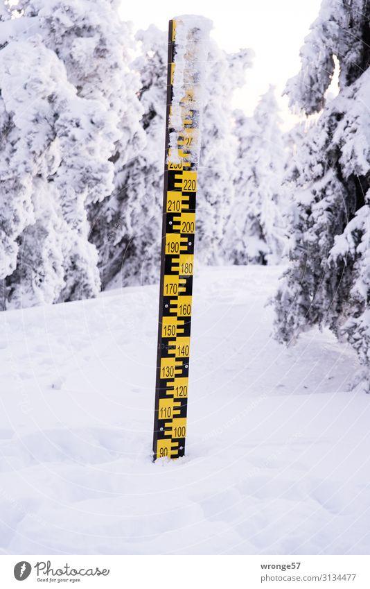 Brocken summit in winter VII Landscape Winter Beautiful weather Ice Frost Snow Tree Mountain Snowcapped peak Tall Cold Harz Winter forest Snowscape Hoar frost