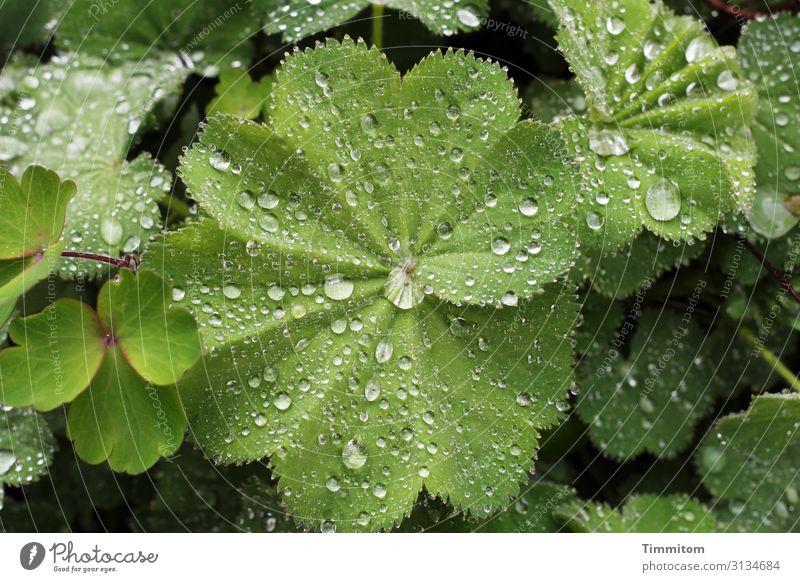 Neighborhoods   botanically seen plants raindrops Green Nature leaves Environment Botany naturally Narrow Neighbourhoods