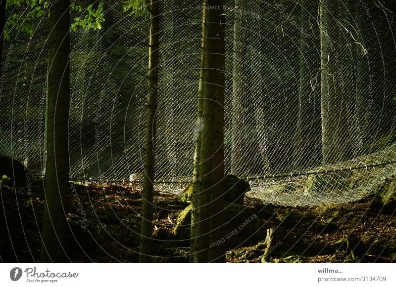 protection and exclusion III Forest Net Reticular Protection Safety Barrier Wire netting Dangerous Forestry Tourism Tree Colour photo Exterior shot