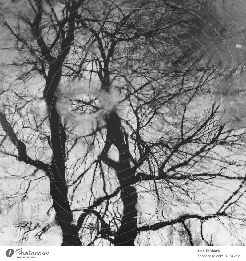 Reflection of a tree without leaves on a water surface, with raindrops Environment Nature Plant Elements Water Drops of water Autumn Rain Tree Puddle Wood Old