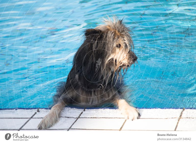 Bathing weather was yesterday Lifestyle Swimming pool Swimming & Bathing Sports Water Summer Beautiful weather Warmth Dog Pelt Observe Relaxation Fitness