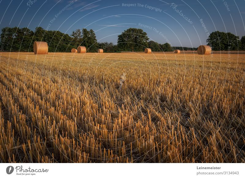 harvest time Environment Nature Landscape Beautiful weather Agricultural crop Field Hannover Germany Warmth Harvest Straw Bale of straw Agriculture Lawn