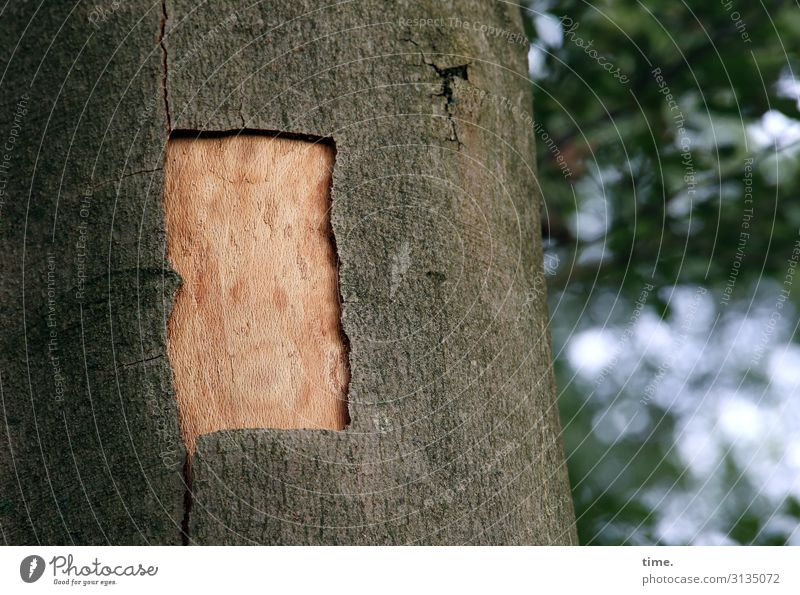 Laceration | skin matter Beautiful weather Tree Tree trunk Tree bark Beech tree Forest Exceptional Watchfulness Curiosity Interest Surprise Discover Concentrate