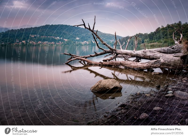 Dead Trees Over Calm Lake Sky Vacation & Travel Nature Summer Plant Blue Beautiful White Landscape Ocean Relaxation Clouds Loneliness Forest