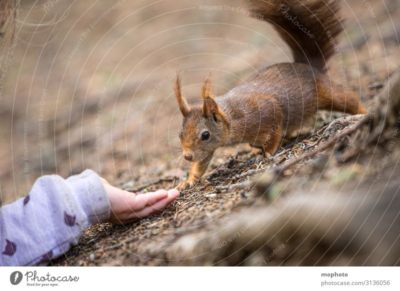 Feeding squirrels #5 Eating Vacation & Travel Trip Child Human being Girl Hand 3 - 8 years Infancy Nature Animal Forest Wild animal 1 To feed Sit Wait