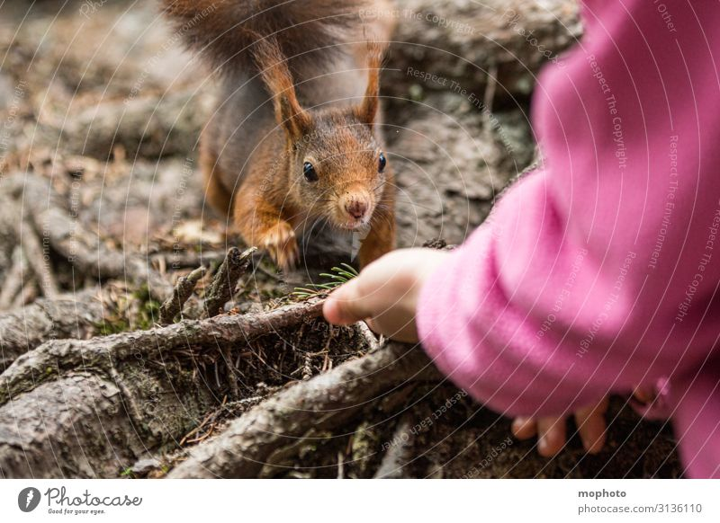 Feeding squirrels #6 Eating Vacation & Travel Trip Child Human being Girl Hand 1 3 - 8 years Infancy Nature Animal Spring Forest Wild animal To feed Sit Wait