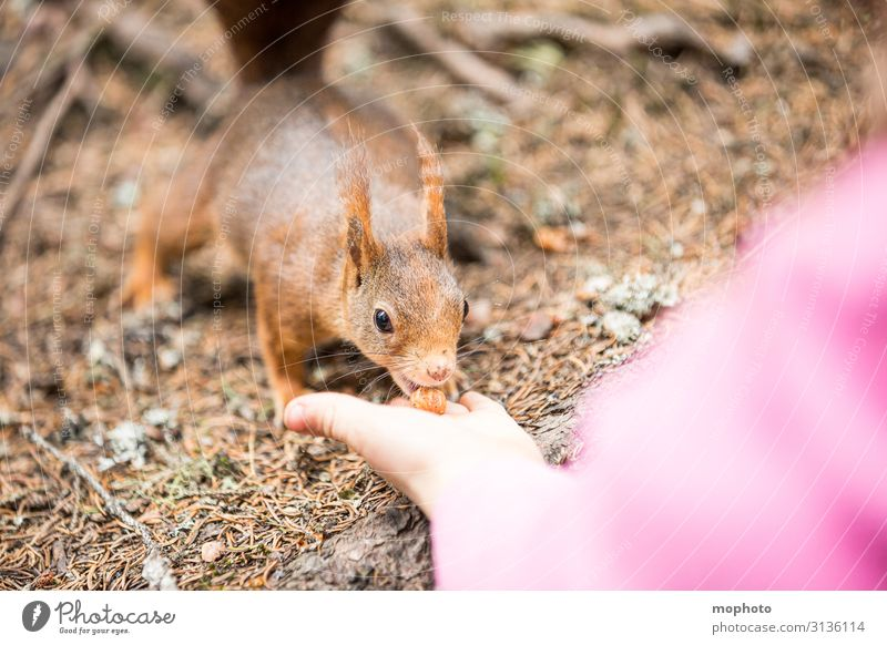 Feeding squirrels #7 Hazelnut Eating Vacation & Travel Tourism Trip Child Human being Girl Infancy Hand 1 3 - 8 years Nature Animal Forest Wild animal To feed