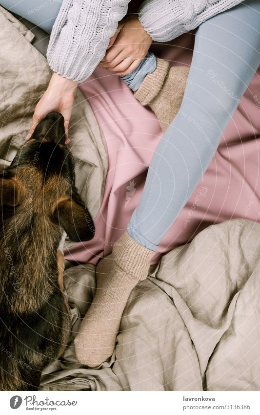 Flatlay of woman petting her dog in bed Autumn Bedroom Blanket Duvet Cold Safety (feeling of) Cozy Dog Faceless Woman flat lay Young woman Girl Hand Home hygge