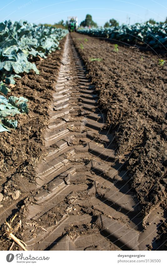 Tractor in broccoli farmland. Big broccoli plantation. Vegetable Vegetarian diet Healthy Eating Work and employment Gardening Plant Growth Green Broccoli