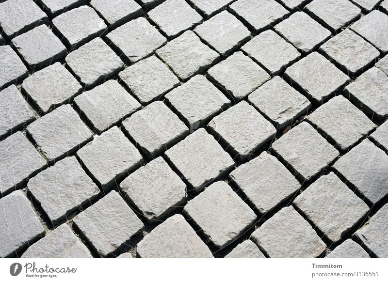A net on the ground Lanes & trails Stone Line Lie Esthetic Sharp-edged Gray Places Hard Paving stone Net Colour photo Exterior shot Pattern Deserted Day