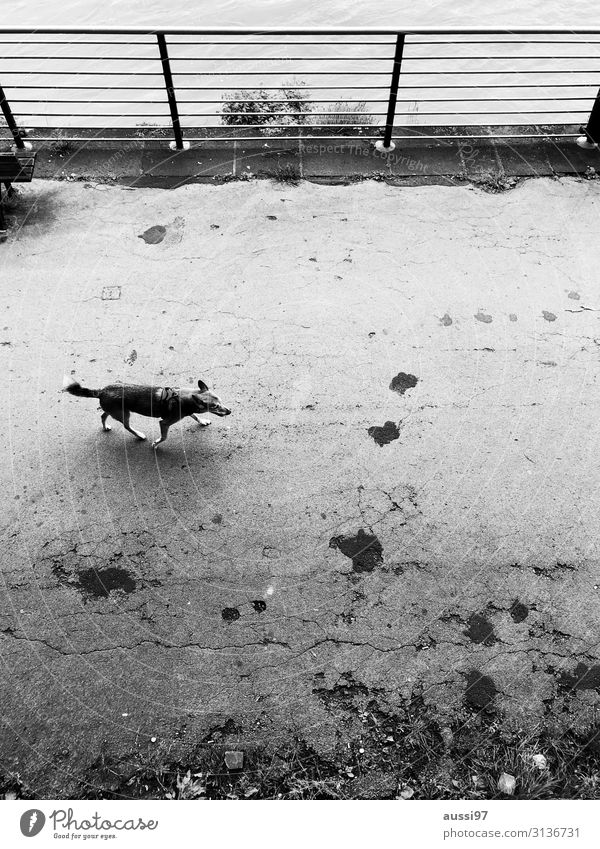 Snooping as usual Dog To go for a walk Promenade Black & white photo Handrail Loneliness Bird's-eye view Prowl