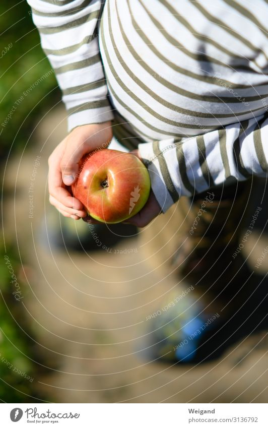 apple happiness Food Fruit Apple Nutrition Picnic Organic produce Vegetarian diet Diet Slow food Kindergarten Child 1 Human being Environment Nature Eating Red