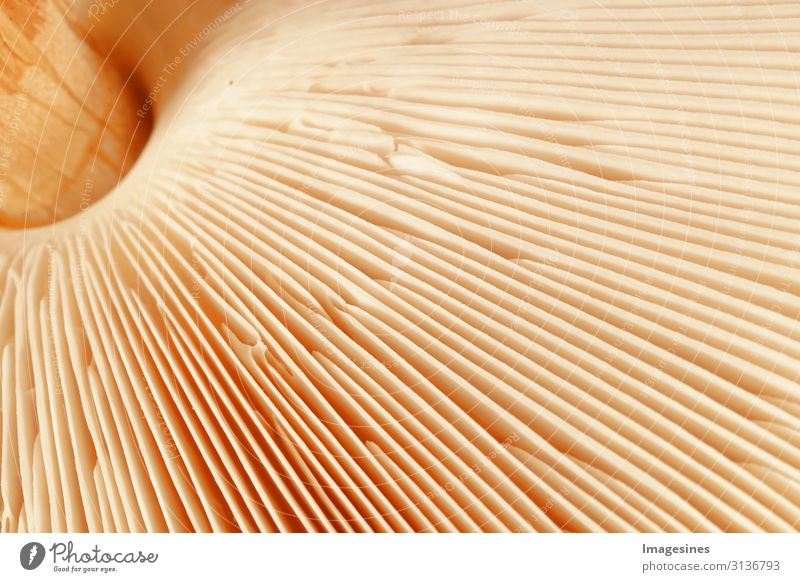 "slats Mushroom Nutrition Diet Nature Plant Mushroom cap Lamella Disk Living thing Striped Yellow Gold Design Environment Growth ""Close-up,Macrolepiota Procera"