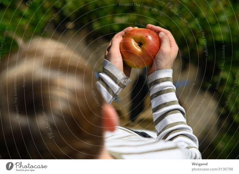 apple happiness Food Fruit Apple Nutrition Eating Organic produce Vegetarian diet Slow food Parenting Kindergarten Study Child Toddler Infancy 1 Human being