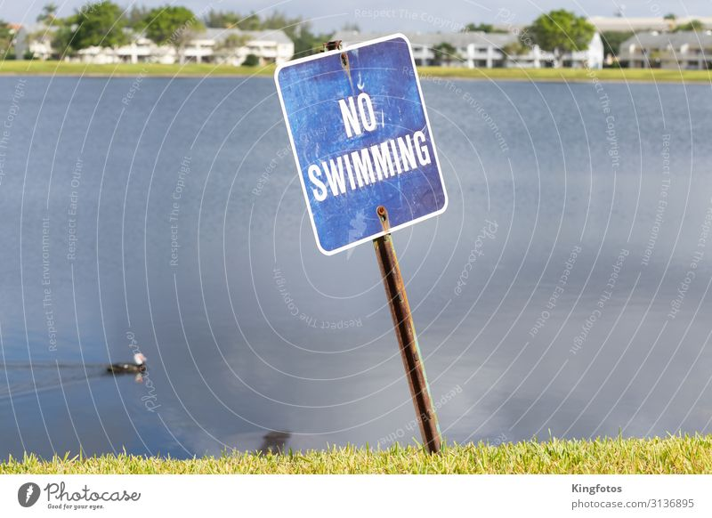 No Swimming Environment Nature Landscape Water Lakeside Pond House (Residential Structure) Building Duck 1 Animal Bans Far-off places Swimming & Bathing Blue
