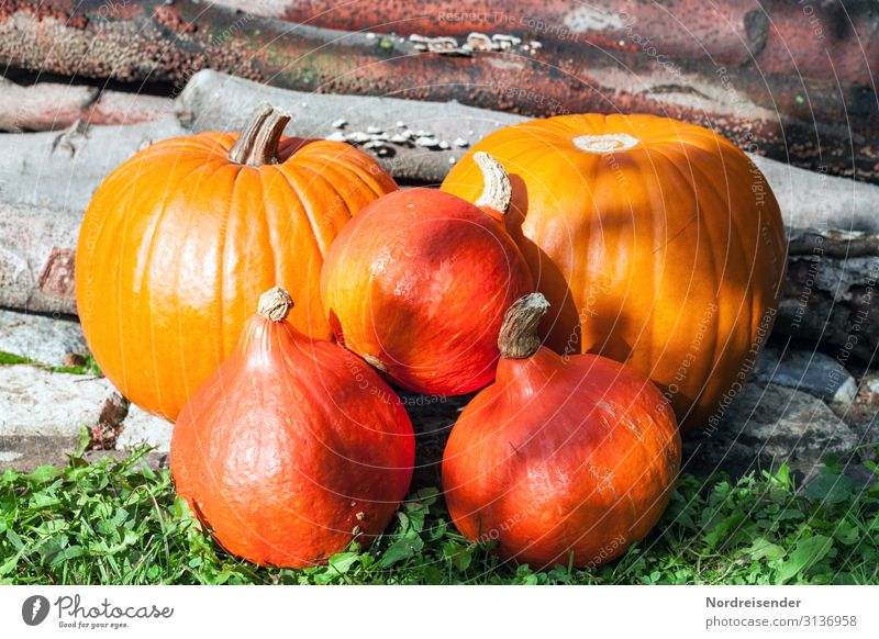 pumpkin season Food Vegetable Fruit Nutrition Organic produce Vegetarian diet Garden Feasts & Celebrations Thanksgiving Hallowe'en Agriculture Forestry Nature
