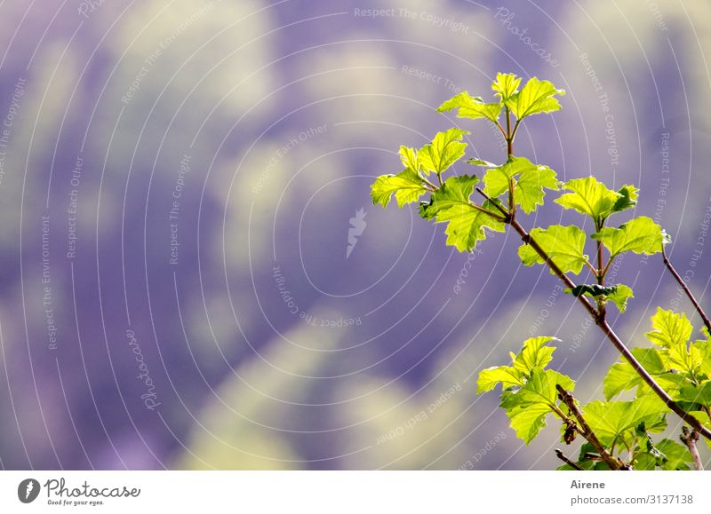 Nature Plant Leaf Yellow Spring Natural Small Bright Fresh Growth Beginning Bushes Beautiful weather Simple Violet Delicate