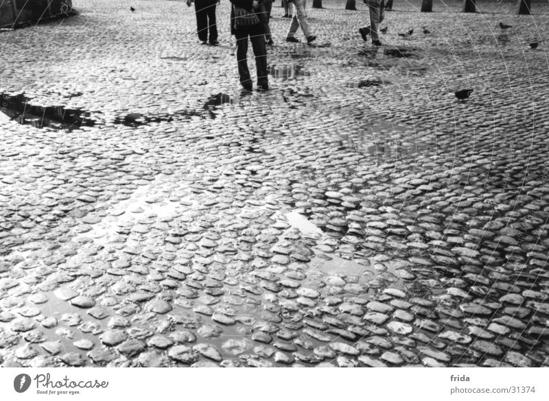 cobblestones Cobblestones Wet Town Puddle Transport Legs Black & white photo Stone Floor covering Street