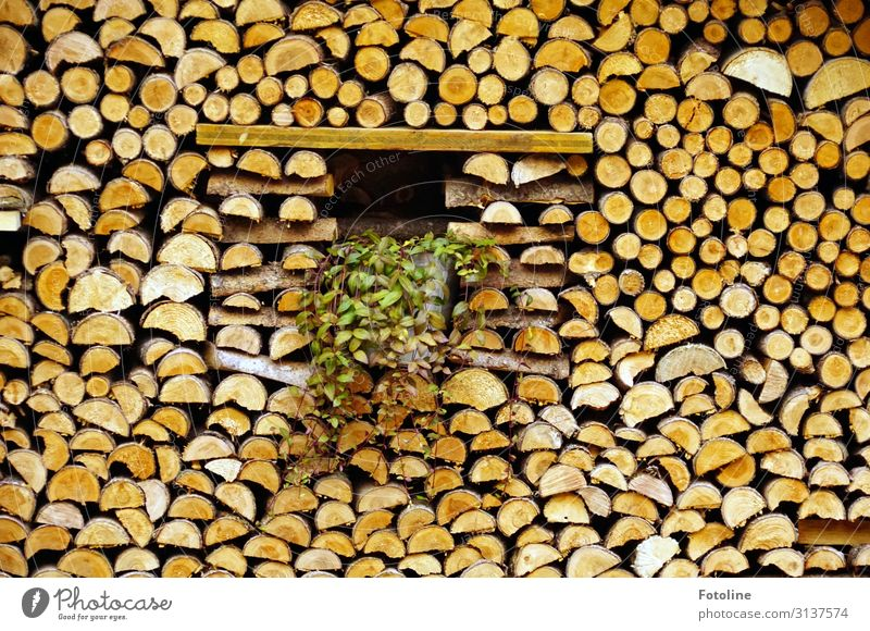Wood in front of the hut Natural Brown Firewood Stack of wood Colour photo Multicoloured Exterior shot Detail Deserted Day Light Sunlight