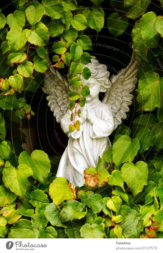 Farewell Environment Nature Plant Summer Beautiful weather Leaf Foliage plant Wild plant Bright Small Natural Green White Cemetery Angel Heavenly Sculpture