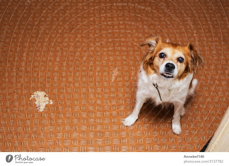Dog vomit in the living room on the floor, sick dog vomitted Beautiful Face Medical treatment Illness Hospital Friendship Nature Animal Grass Pet Small Cute