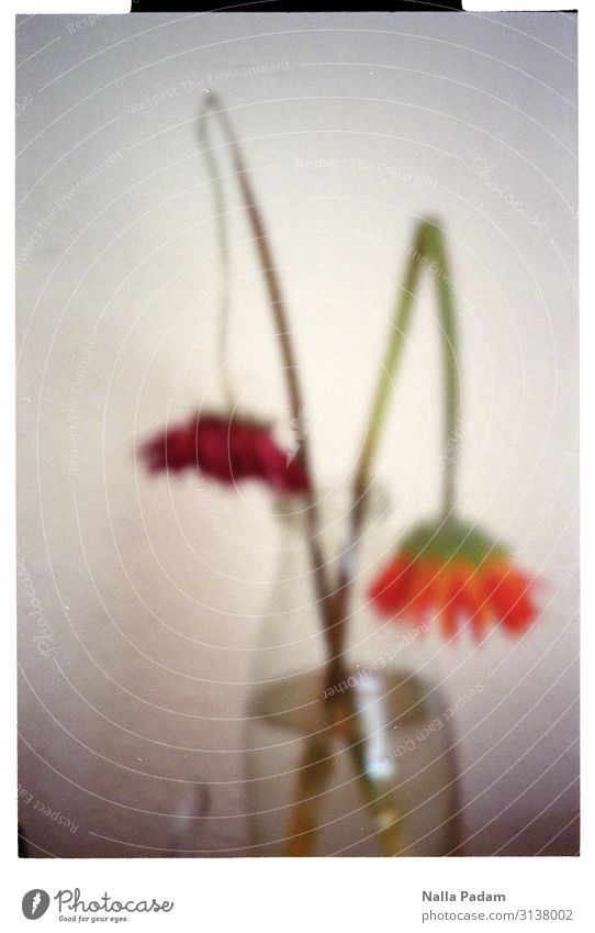 fading Plant Water Flower Blossom Broken Orange Red Fatigue Exhaustion Vase End Colour photo Interior shot Deserted Copy Space right Day Blur