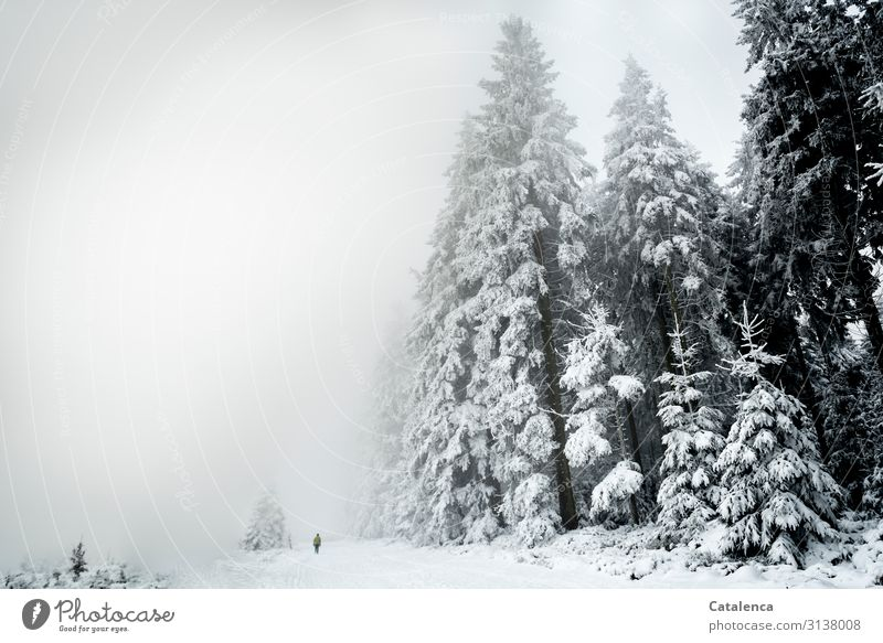 Lost in the fog. Winter Winter vacation Hiking Androgynous 1 Human being Nature Landscape Plant Sky Weather Fog Snow Tree Fir tree Forest Fluid Cold Gray Black