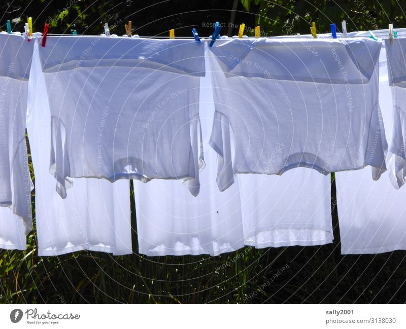 Whitewash day... Clothing T-shirt Underwear Clothes peg Clothesline Hang Clean Dry Housekeeping Washing Hang up Exterior shot Colour photo Day Sunlight
