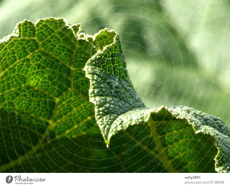 cellular structure Leaf Green leaf margin Nature Plant serrated Prongs Blueprint Rachis Foliage plant Photosynthesis Leaf green Botany Structures and forms