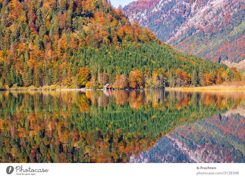 Autumnal colour games Vacation & Travel Tourism Trip Freedom Mountain Hiking Nature Landscape Beautiful weather Tree Leaf Forest Alps Lake Observe To enjoy
