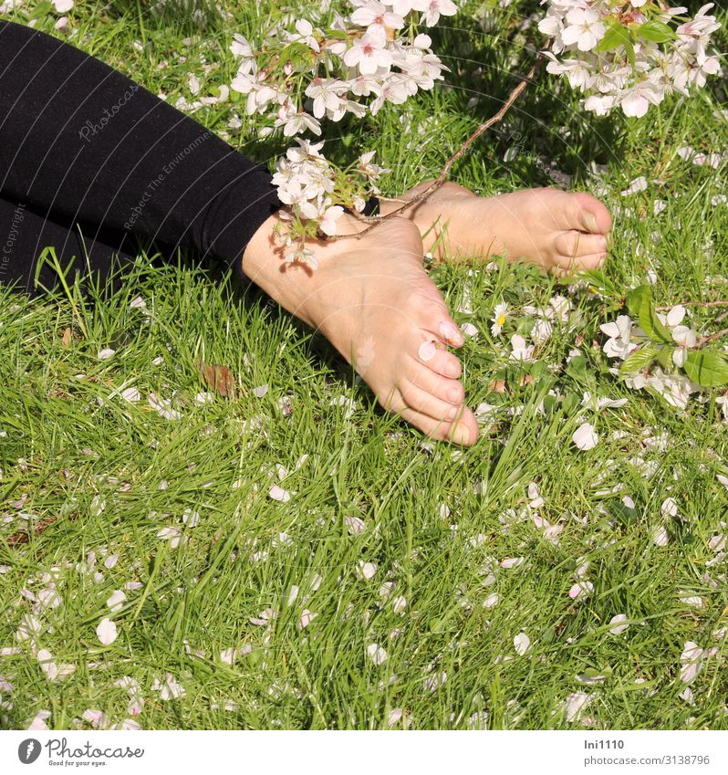 Under the cherry tree Feminine Woman Adults Legs Feet 1 Human being Nature Plant Spring Beautiful weather Tree Grass Blossom Garden Park Green Black White