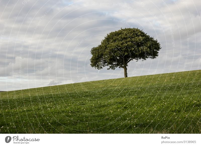 Lonely tree on a meadow. Lifestyle Healthy Wellness Relaxation Meditation Leisure and hobbies Vacation & Travel Hiking Environment Nature Landscape Plant Earth
