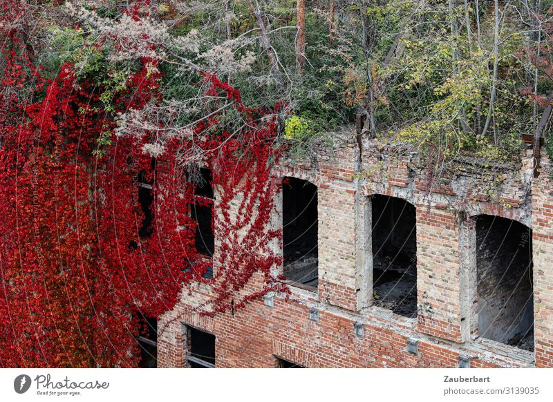 Nature Green Red Tree House (Residential Structure) Window Autumn Wall (building) Environment Natural Sadness Snow Building Wall (barrier) Stone Growth