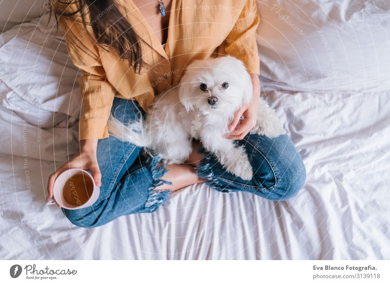 beautiful woman playing with her cute maltese dog at home. Drinking tea or coffee on bed. Relax and Lifestyle Coffee Tea Woman Dog Home Work and employment Bed