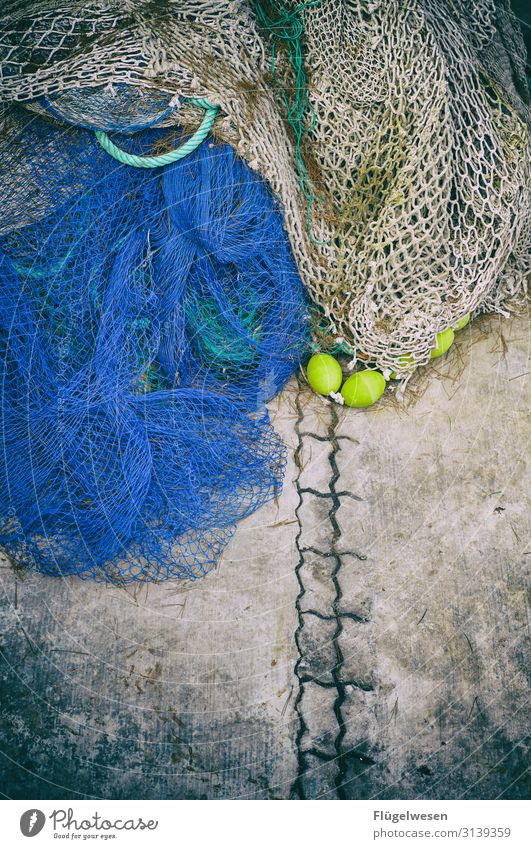 Mains 4 Net Fishing (Angle) Fishery Fisherman Landing net Set of teeth Catch Capture Deployment Network Food Seafood Nutrition Healthy Eating Dish Lunch Buffet
