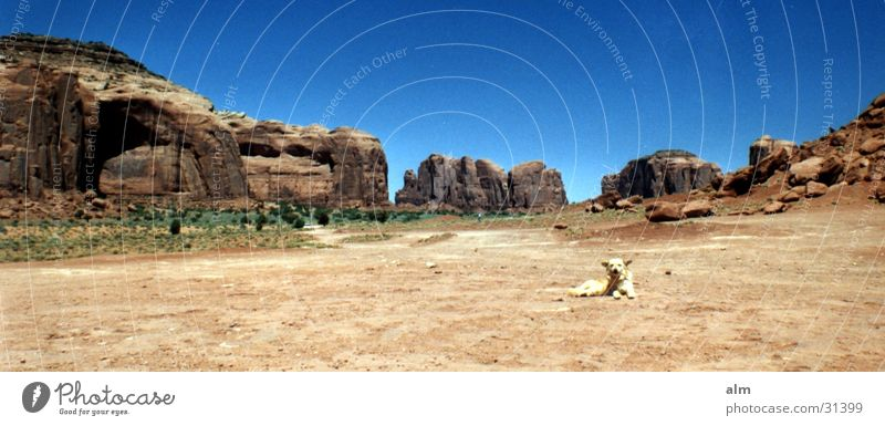 Dog Desert Blue sky Cloudless sky Destination Monument Valley Rock formation Clear sky