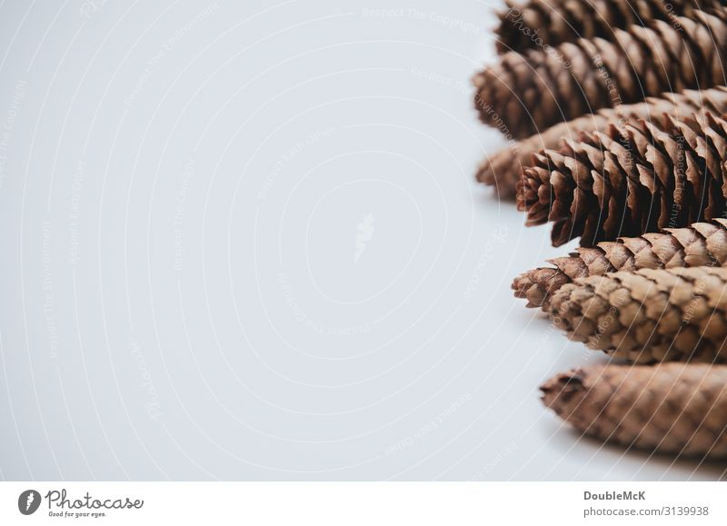cone tips of fir cones are lined up one behind the other Nature Autumn Winter Forest To fall Lie natural Brown White Together Movement Christmas & Advent Cone