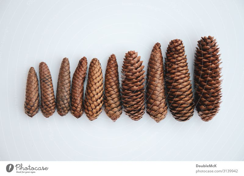 Christmas & Advent White Forest Winter Autumn Environment Natural Movement Brown Contentment Lie To fall Orderliness Cone Fir cone