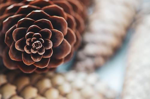 Fir cone tip and fir cones placed on top of each other Nature Autumn Winter Forest Lie natural Round Brown White Safety (feeling of) Cone Christmas & Advent
