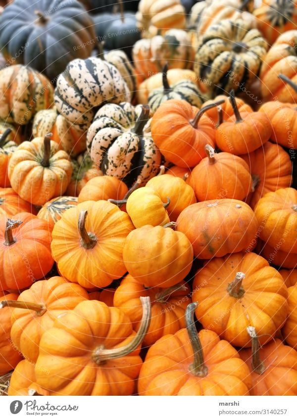 pumpkins Nature Moody Orange Pumpkin Pumpkin time Mixture Multicoloured Autumn Autumnal Hallowe'en Nutrition Healthy Eating Colour photo Exterior shot Close-up