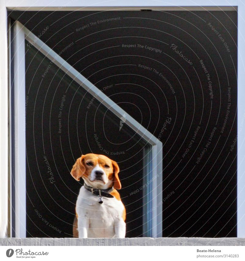Dog life: longing Lifestyle Living or residing Flat (apartment) House (Residential Structure) Window Animal face Breathe Observe Think Discover To enjoy Looking