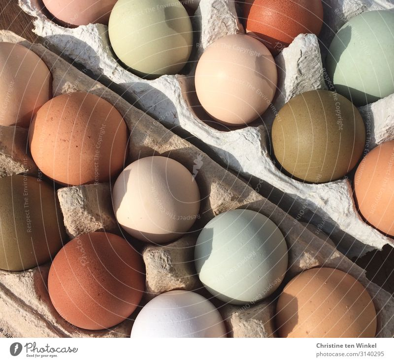 naturally colored hen's eggs Food Hen's egg Nutrition Organic produce Feasts & Celebrations Easter Eggs cardboard Exceptional Fresh Healthy Delicious Near