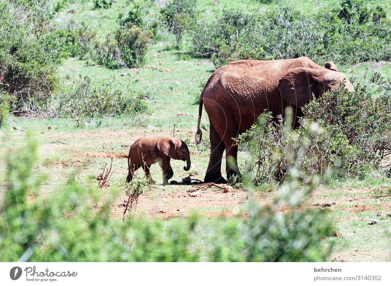 when the mother with the son Baby animal Animal protection Exterior shot Wild Fantastic Impressive Exotic Sunlight Wilderness beautifully especially Nature